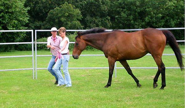 Horsewhispering